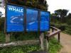 Logan's Beach Whale Nursery