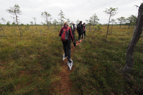 Soomaa National Park Peat Bog walk in Estonia